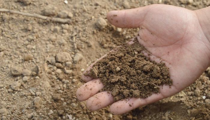 a hand full of soil