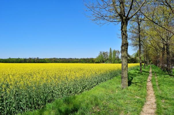 footpath beside a field