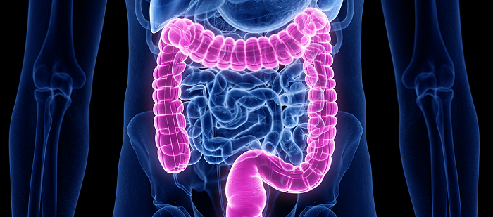 Illustration showing the colon inside the body_ SciePro, Adobe Stock