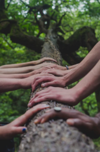 many hands on a log in the woods