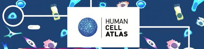 Human cell Atlas banner_  © Wellcome Sanger Institute