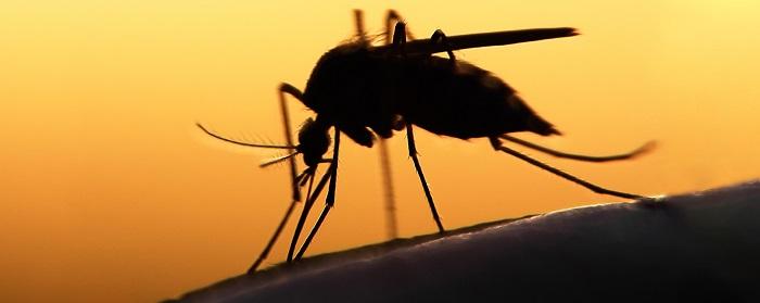 Hero mosquito_ Image credit: AdobeStock