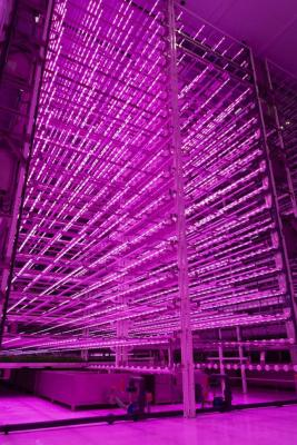 Jones Food Company believes that large-scale facilities are the only way for vertical farms to compete with conventional agriculture. Source: Jones Food Company.
