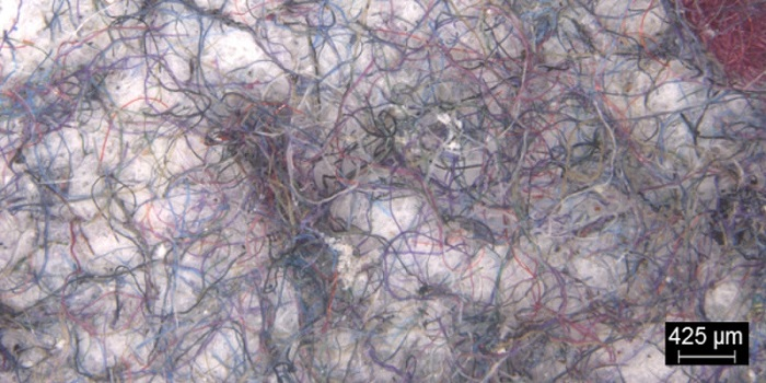 Microscopic microfibres filtered from the test washing loads/ Credit: University of Leeds/P&G