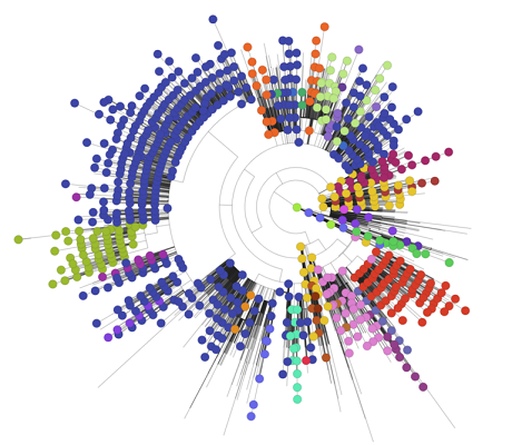 The phylogenetic tree indicates the position of the UK genomes within a global context