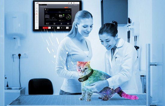Cat  in veterinary surgery wearing wireless animal monitoring solution, WirelessZoo™