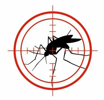 insect on the bulls eye of a target