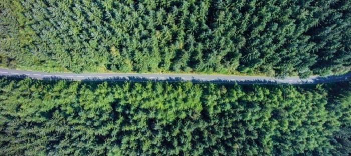 road and forest from above _ Johnson Matthey