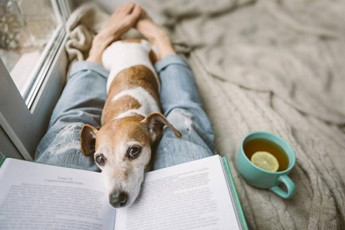 dog rests his head on a book as reader (out of sight) reclines with a cup of tea