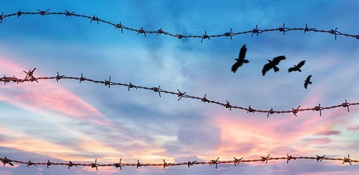 barbed wire and birds against an evening sky