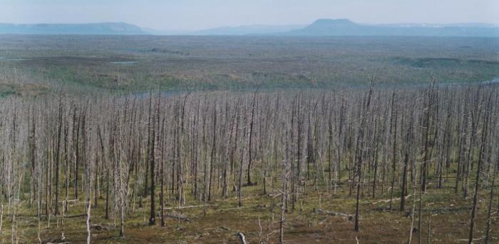 Forest decline east of Norilsk  Credit: Dr Alexander Kirdyanov
