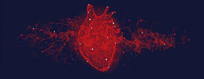 Heart _crredit AdobeStock