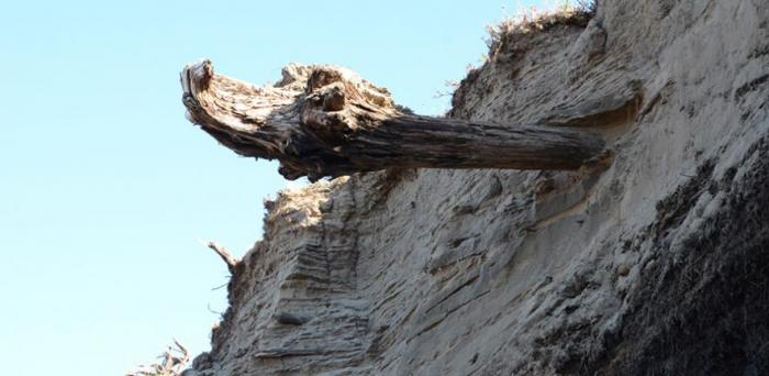 Driftwood in Siberia  Credit: Clive Oppenheimer