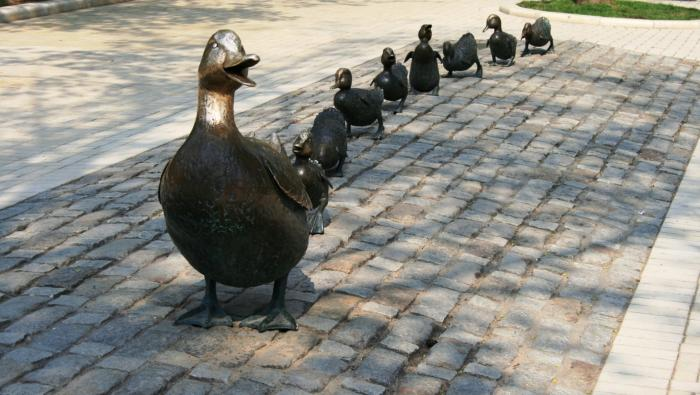 ducks walking in a row