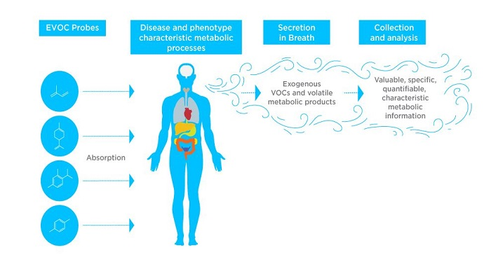 Use of Exogenous VOC (EVOC) Probes to provide clear biomarkers in breath.