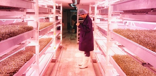 Growing food underground