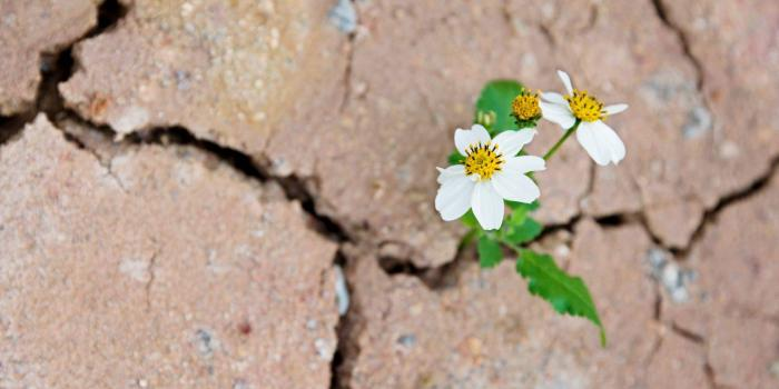 flower on a cracked pavement
