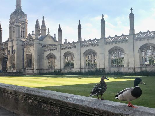 Ducks promenading along the wall outside King's College