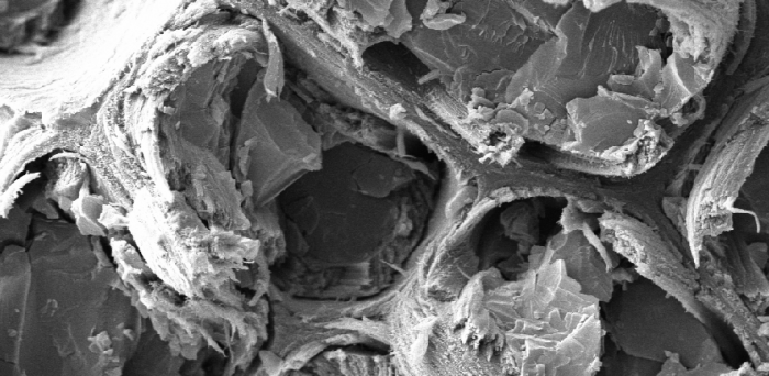 microscopic image of spruce_ © University of Cambridge