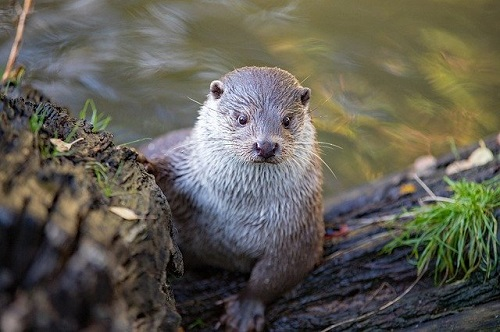 Otter: Image by Jo Stolp from Pixabay
