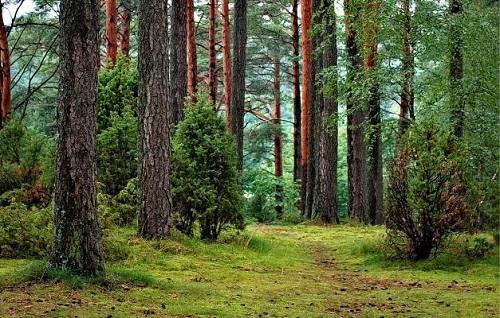 Trees = Pexels Pixabay 302804