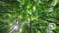 Scope 3 data - trees in sunlight