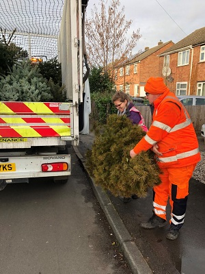 Volunteers collecting Christmas trees