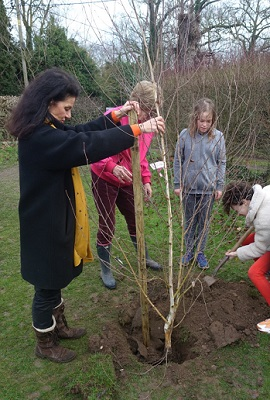 Tree planting in Fulbourn