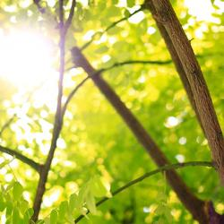 Light through trees  Credit: D. Jameson via Unsplash